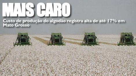 algodao - Custo de produção do algodão registra alta de até 17% em Mato Grosso