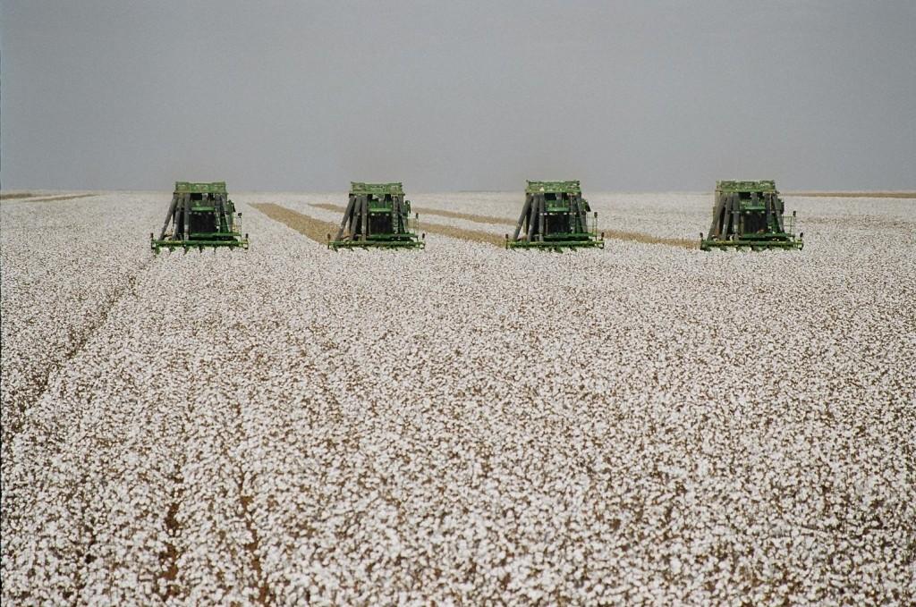 """algodao   1024x679 - Preços do algodão devem """"andar de lado"""""""